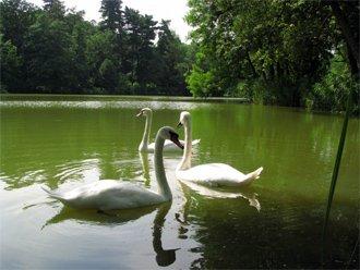 Тростянецкий дендрологический парк